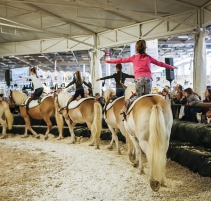 salon-du-cheval_village-enfants-poneys11