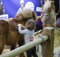 SALON-DU-CHEVAL_village-enfants-poneys1