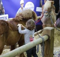 SALON-DU-CHEVAL_village-enfants-poneys1