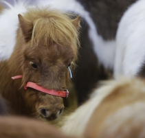 SALON-DU-CHEVAL_village-enfants-poneys2