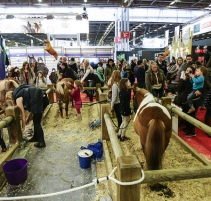 SALON-DU-CHEVAL_village-enfants-poneys7
