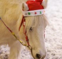 SALON-DU-CHEVAL_village-enfants-poneys8