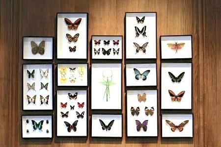 DEYROLLE_papillons